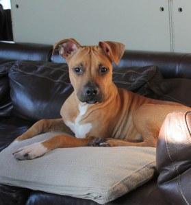 Rufus 1